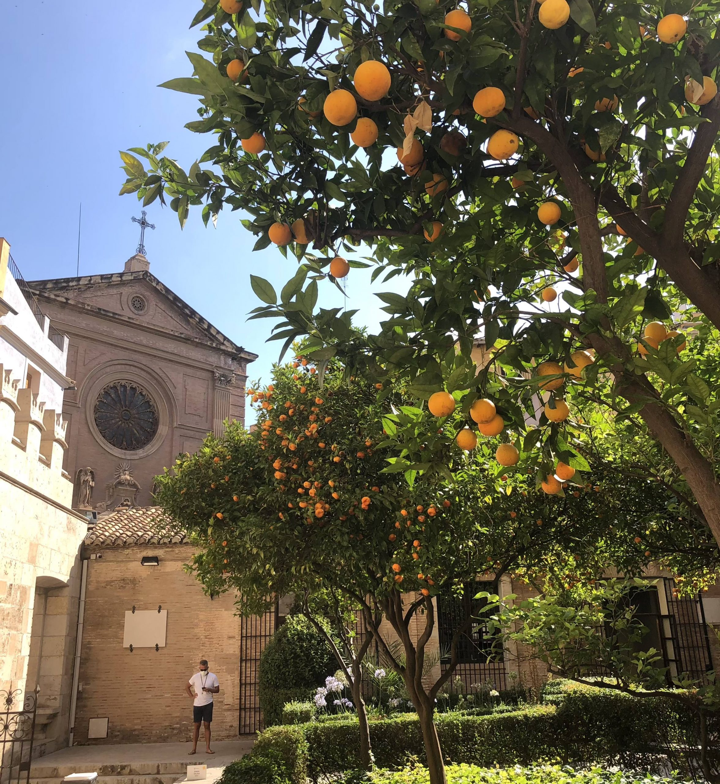 orange trees in La Lonja